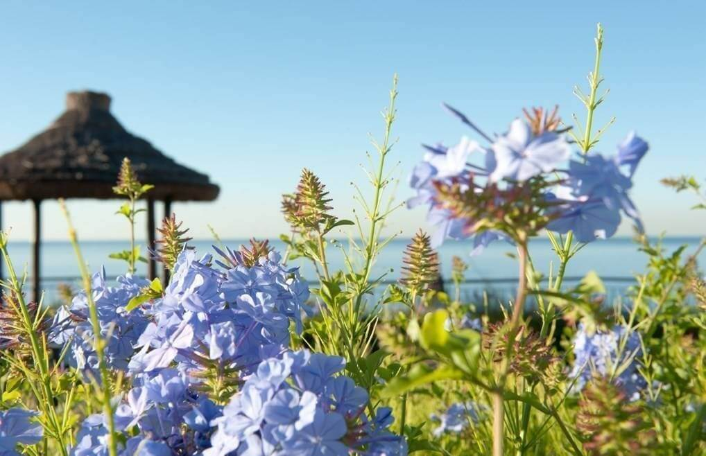 Resort Vila Porto Mare - Madeira Island -  Gazebo