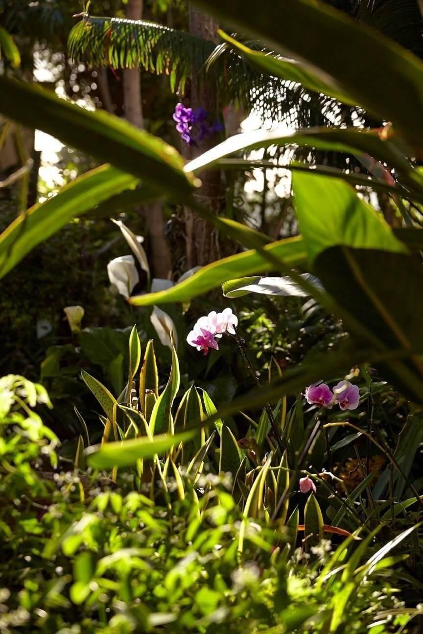 Resort Vila Porto Mare - Madeira Island - Gardens